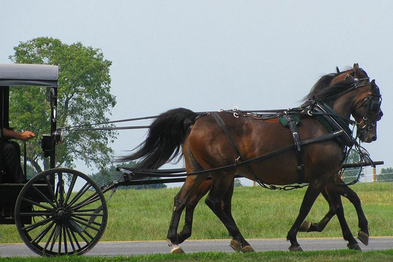 Amish Farmland Tours from the Visitor's Center